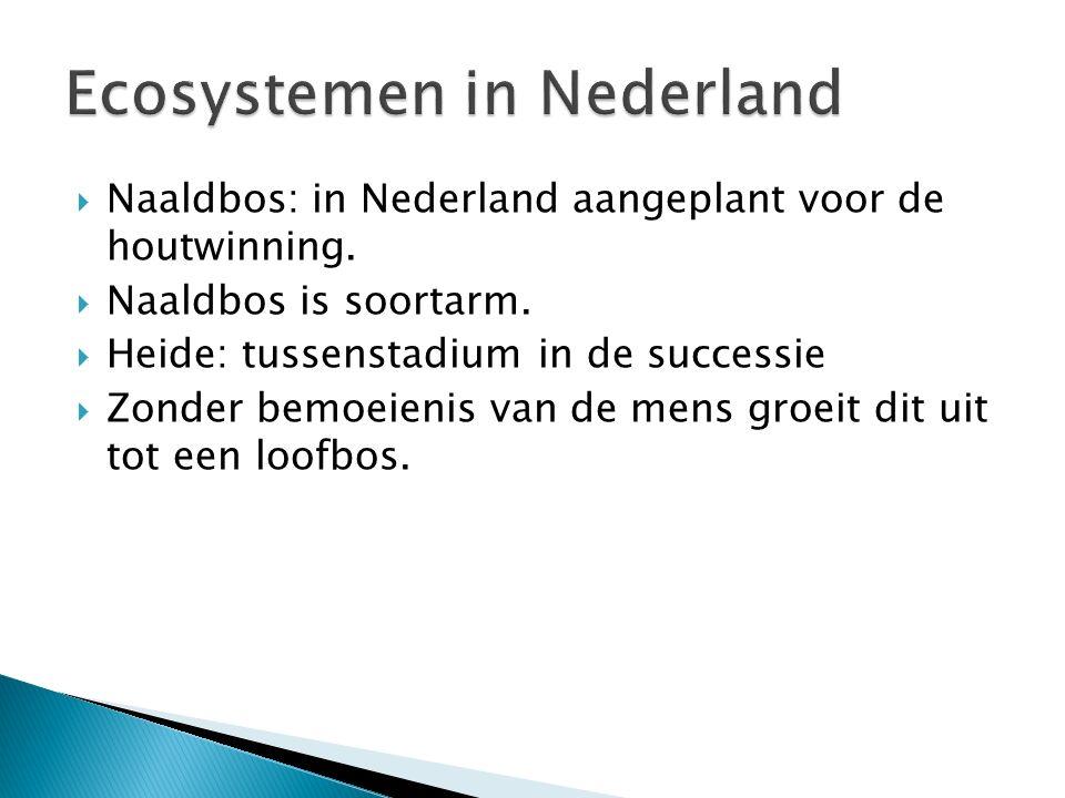 Naaldbos: in Nederland aangeplant voor de houtwinning.  Naaldbos is soortarm.  Heide: tussenstadium in de successie  Zonder bemoeienis van de men