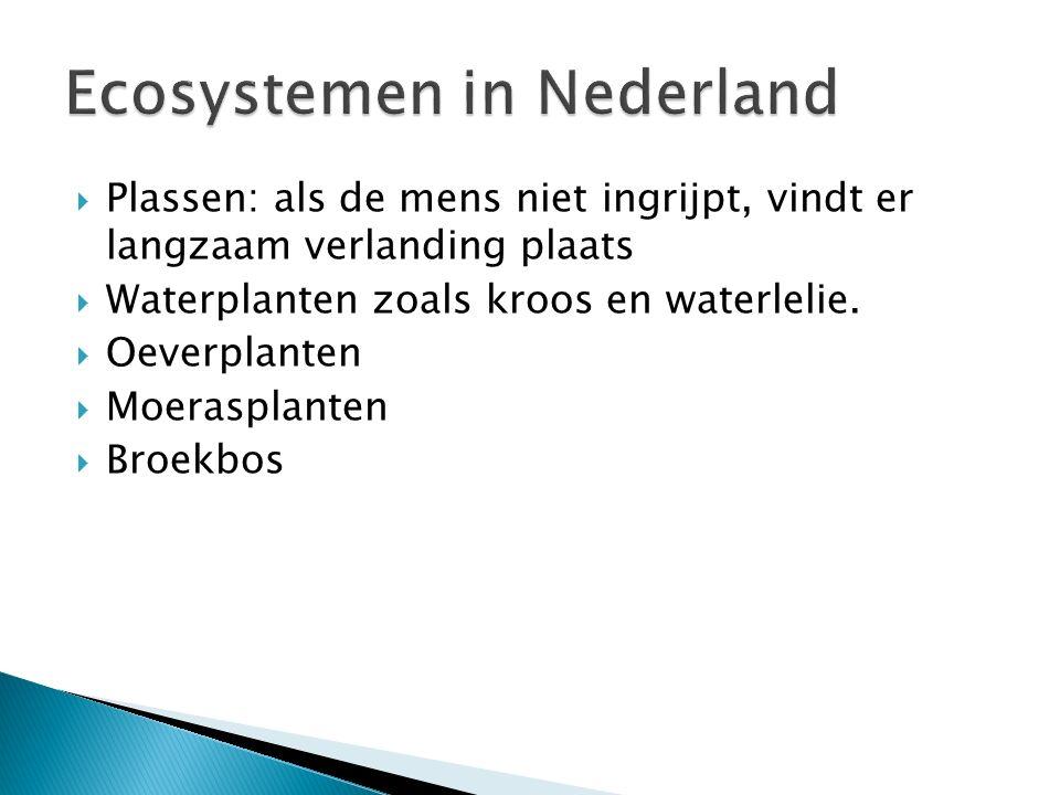  Plassen: als de mens niet ingrijpt, vindt er langzaam verlanding plaats  Waterplanten zoals kroos en waterlelie.  Oeverplanten  Moerasplanten  B