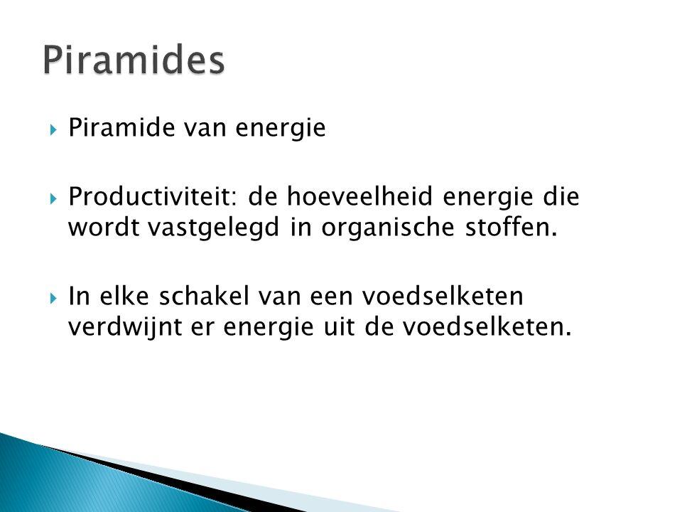  Piramide van energie  Productiviteit: de hoeveelheid energie die wordt vastgelegd in organische stoffen.  In elke schakel van een voedselketen ver