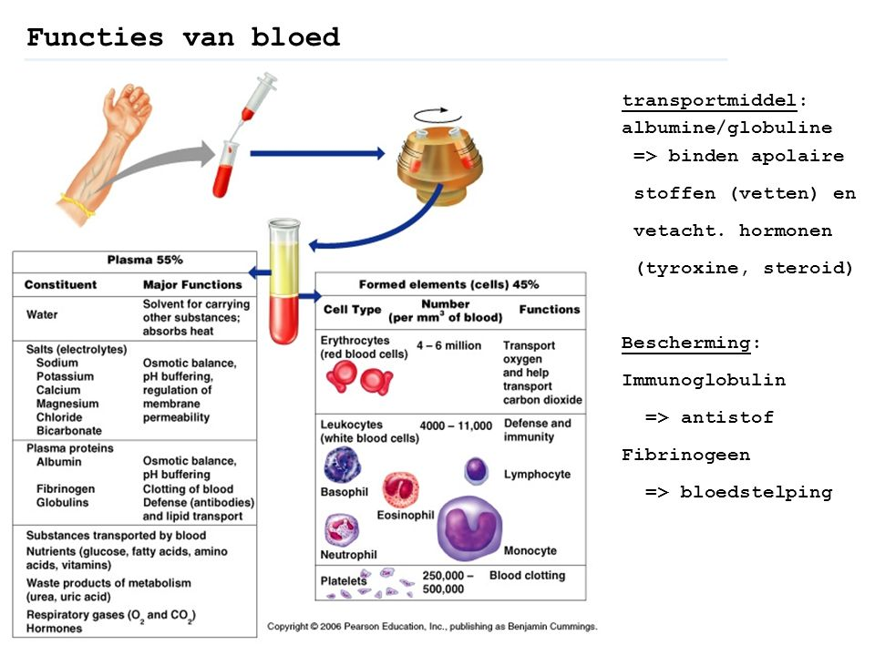 transportmiddel: albumine/globuline => binden apolaire stoffen (vetten) en vetacht. hormonen (tyroxine, steroid) Bescherming: Immunoglobulin => antist