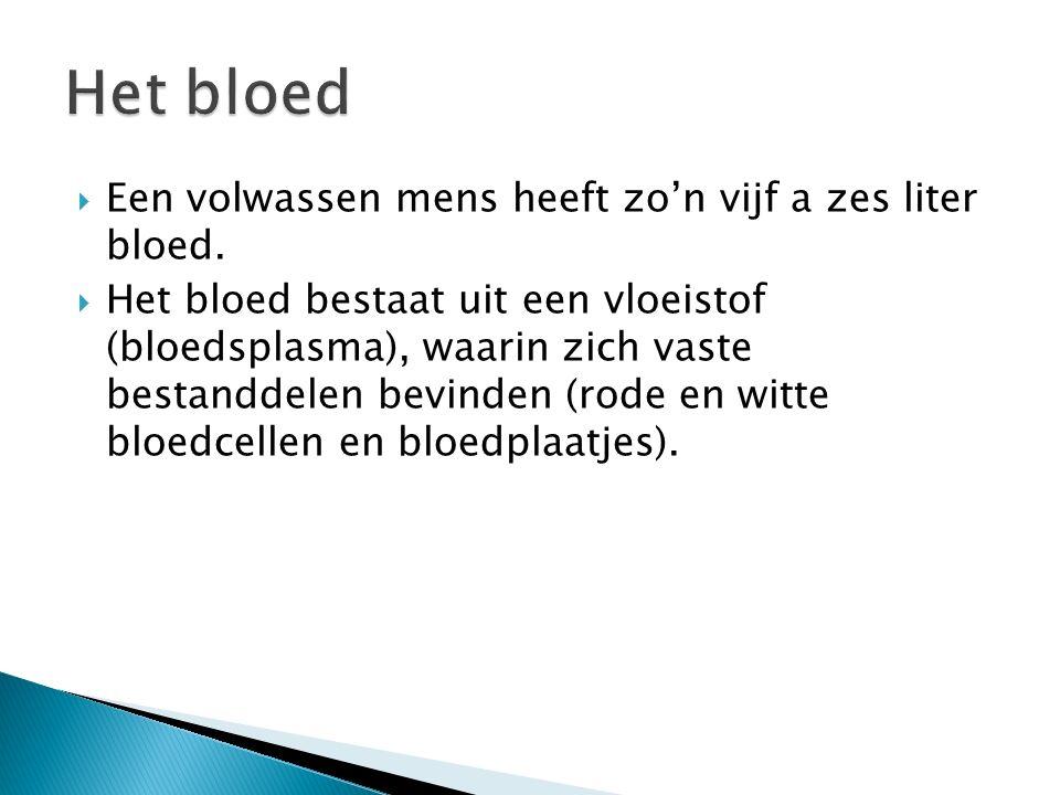  Een volwassen mens heeft zo'n vijf a zes liter bloed.  Het bloed bestaat uit een vloeistof (bloedsplasma), waarin zich vaste bestanddelen bevinden