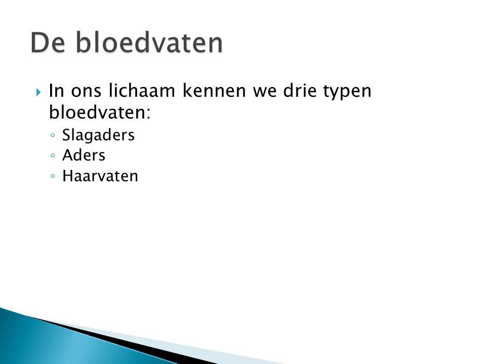  In ons lichaam kennen we drie typen bloedvaten: ◦ Slagaders ◦ Aders ◦ Haarvaten
