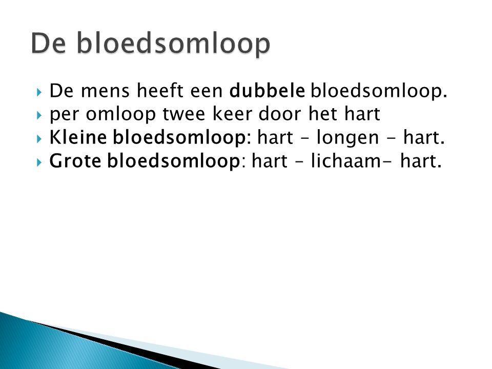  De mens heeft een dubbele bloedsomloop.  per omloop twee keer door het hart  Kleine bloedsomloop: hart – longen - hart.  Grote bloedsomloop: hart