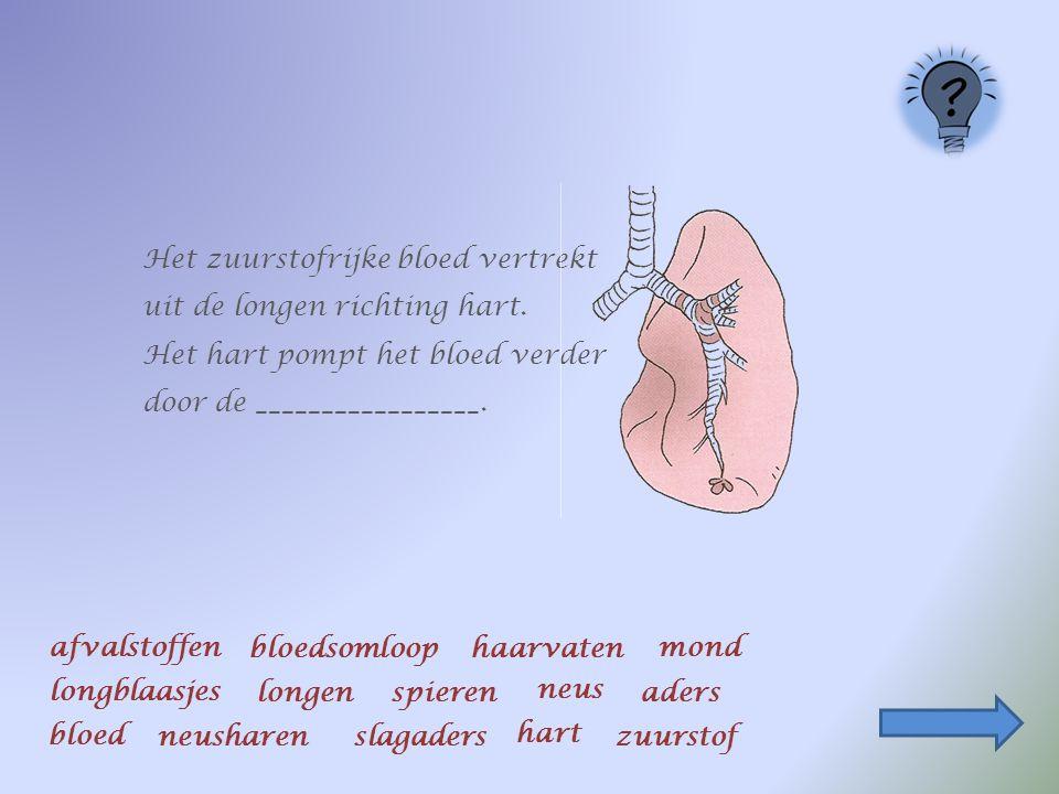 Het zuurstofrijke ________vertrekt uit de longen richting ___________.
