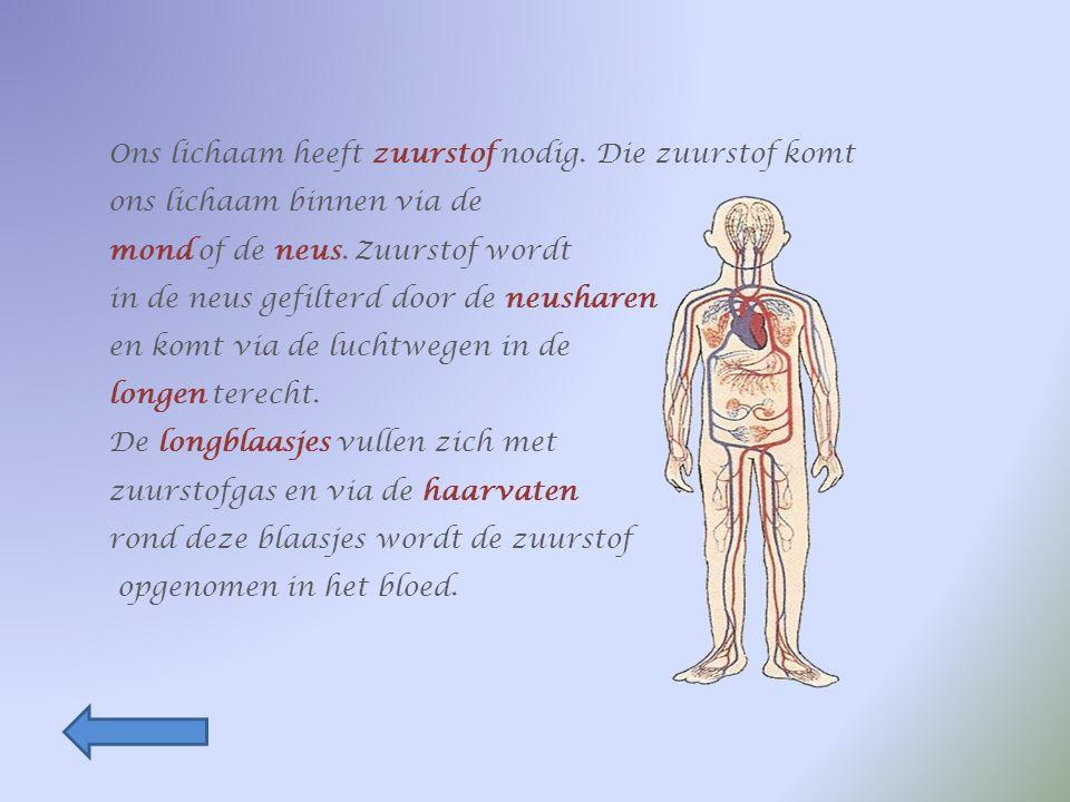 Het bloed stroomt dan via de aders terug naar de longen, waar de reis opnieuw kan beginnen.