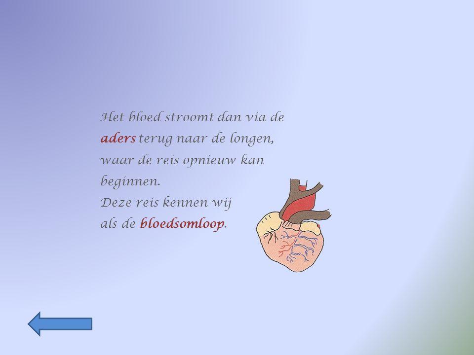 Het zuurstofrijke bloed vertrekt uit de longen richting hart.