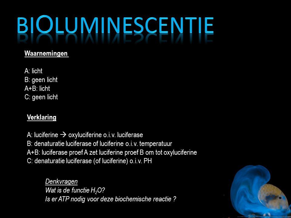 Waarnemingen A: licht B: geen licht A+B: licht C: geen licht Verklaring A: luciferine  oxyluciferine o.i.v. luciferase B: denaturatie luciferase of l