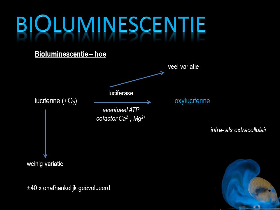 Bioluminescentie – hoe luciferine (+O 2 )oxyluciferine luciferase eventueel ATP cofactor Ca 2+, Mg 2+ intra- als extracellulair weinig variatie veel v