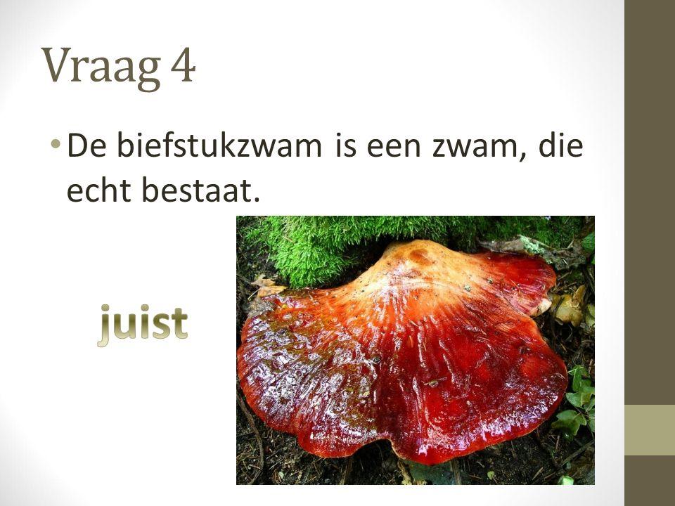 Vraag 4 De biefstukzwam is een zwam, die echt bestaat.