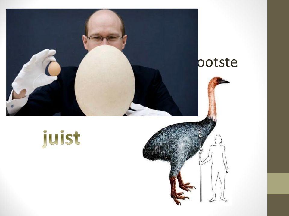 Vraag 5 De olifantsvogel legt de grootste eieren ter wereld.