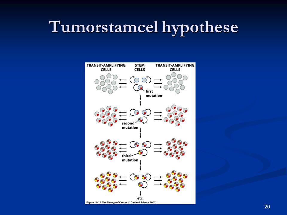 20 Tumorstamcel hypothese