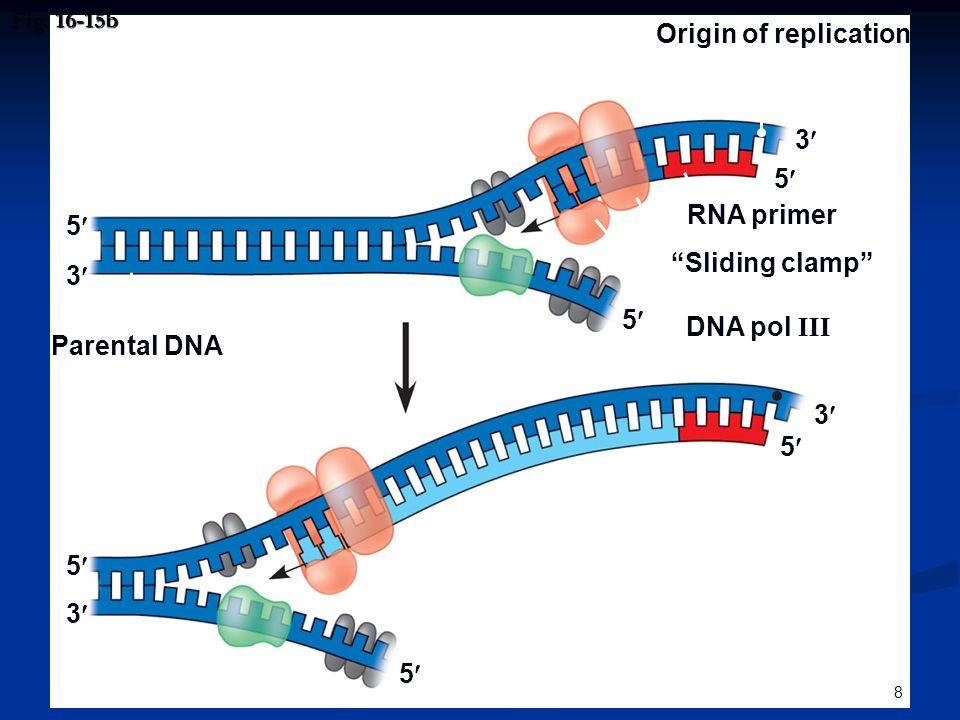 """8 Fig. 16-15b Origin of replication RNA primer """"Sliding clamp"""" DNA pol III Parental DNA 3 5 5 5 5 5 5 3 3 3"""