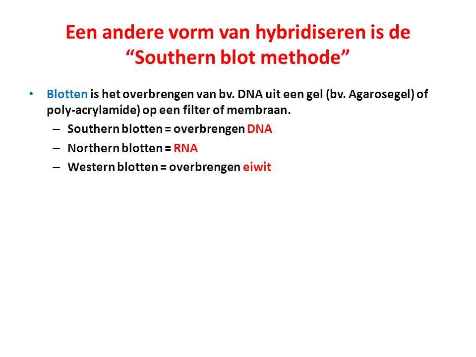 """Een andere vorm van hybridiseren is de """"Southern blot methode"""" Blotten is het overbrengen van bv. DNA uit een gel (bv. Agarosegel) of poly-acrylamide)"""