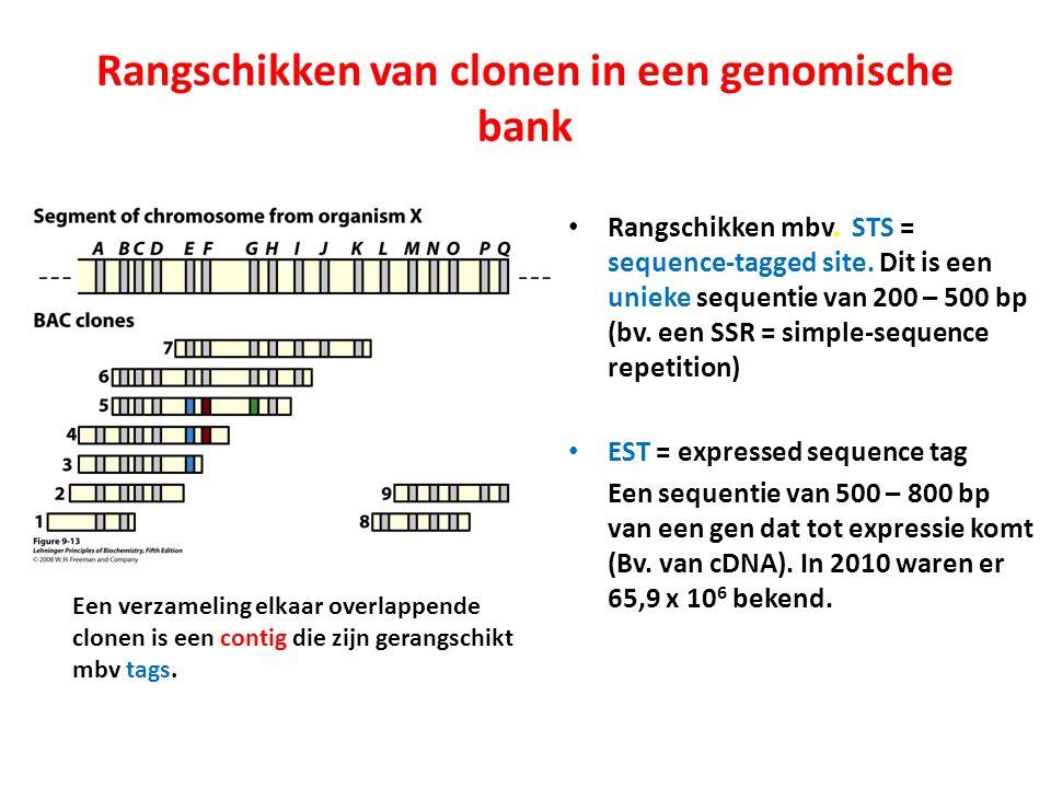 Rangschikken van clonen in een genomische bank Rangschikken mbv. STS = sequence-tagged site. Dit is een unieke sequentie van 200 – 500 bp (bv. een SSR