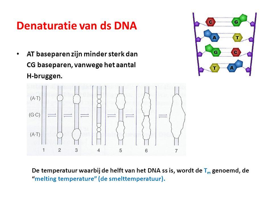 Denaturatie van ds DNA AT baseparen zijn minder sterk dan CG baseparen, vanwege het aantal H-bruggen. De temperatuur waarbij de helft van het DNA ss i