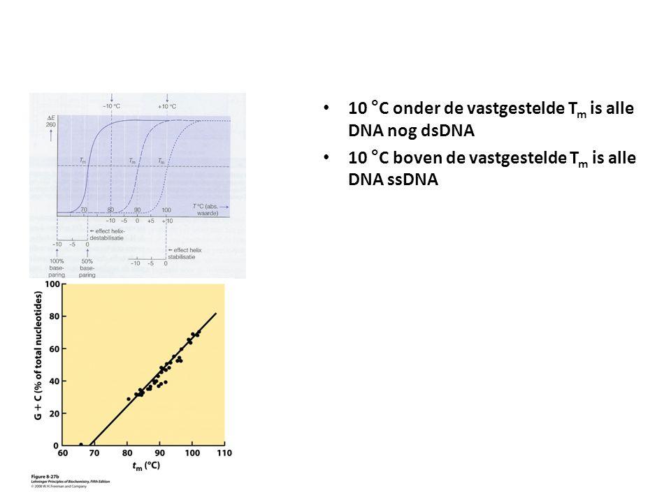 10 °C onder de vastgestelde T m is alle DNA nog dsDNA 10 °C boven de vastgestelde T m is alle DNA ssDNA