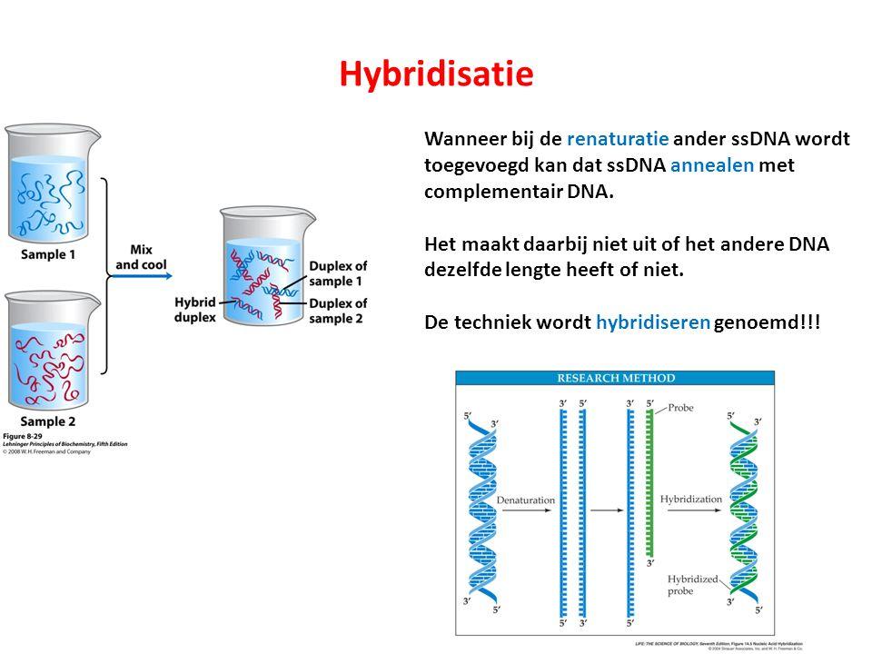 Hybridisatie Wanneer bij de renaturatie ander ssDNA wordt toegevoegd kan dat ssDNA annealen met complementair DNA. Het maakt daarbij niet uit of het a