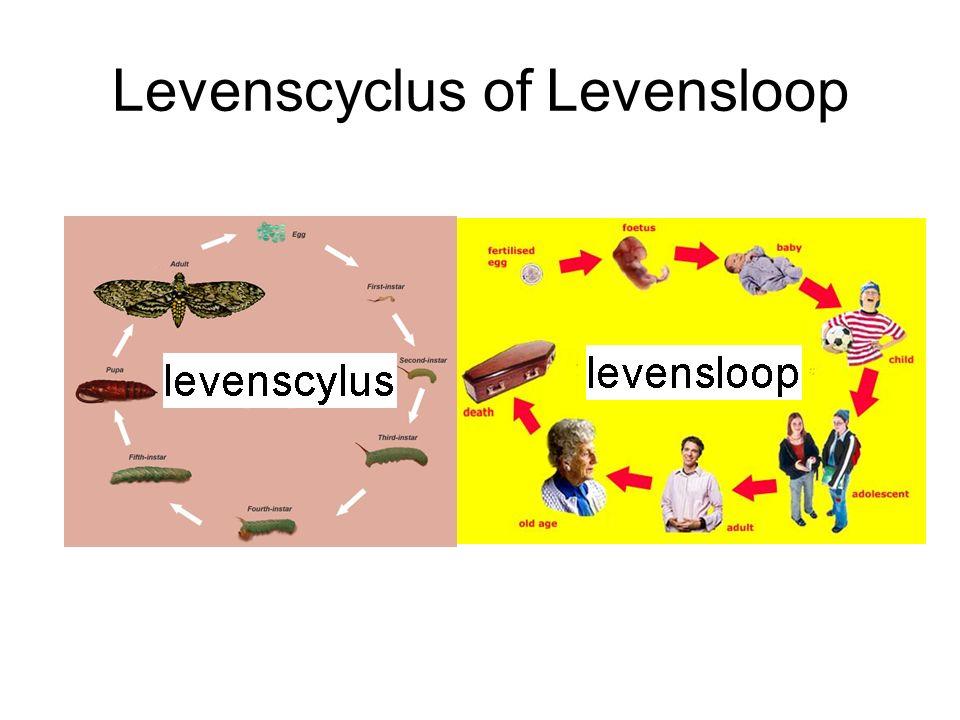 Levenscyclus of Levensloop