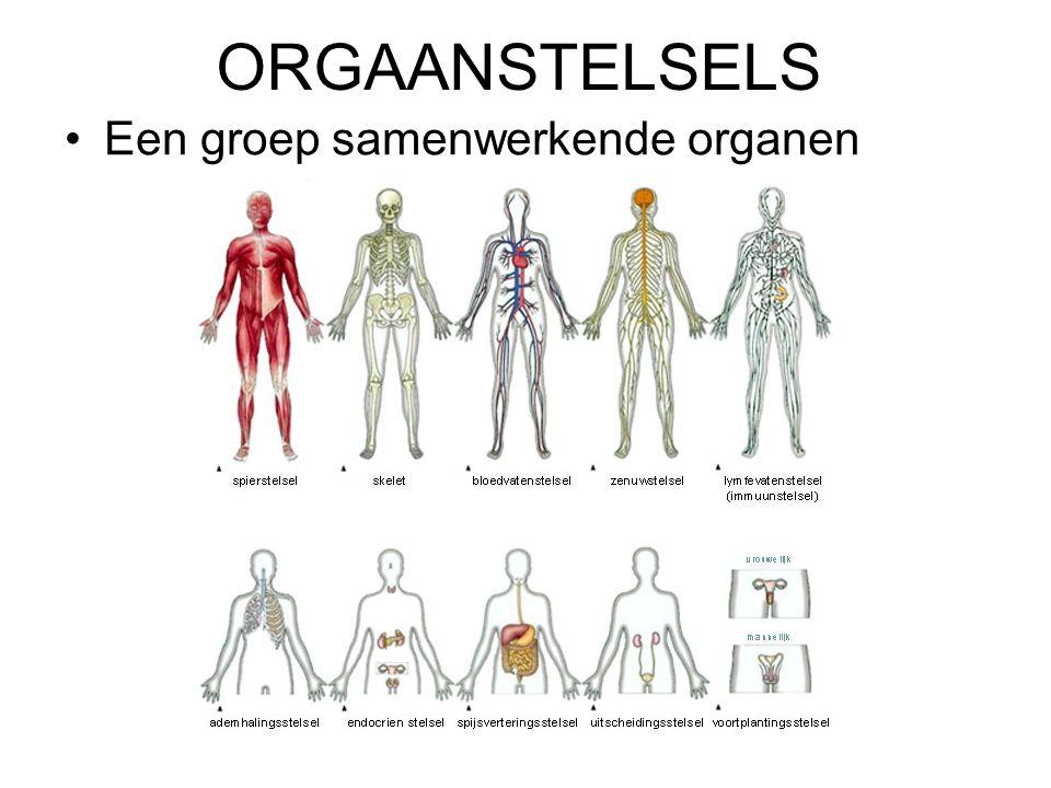 ORGAANSTELSELS Een groep samenwerkende organen
