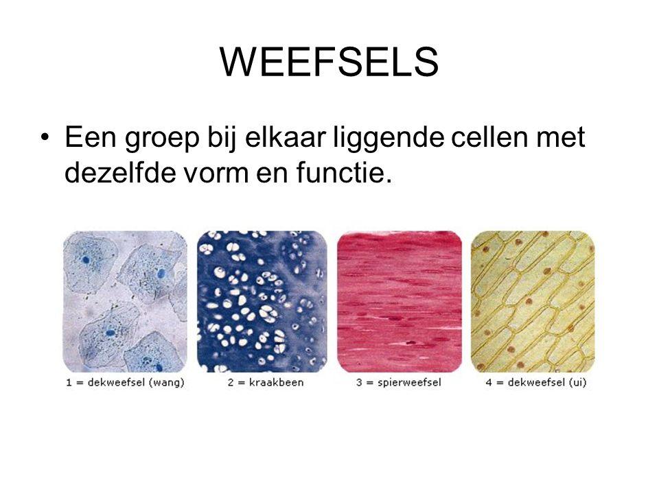 WEEFSELS Een groep bij elkaar liggende cellen met dezelfde vorm en functie.