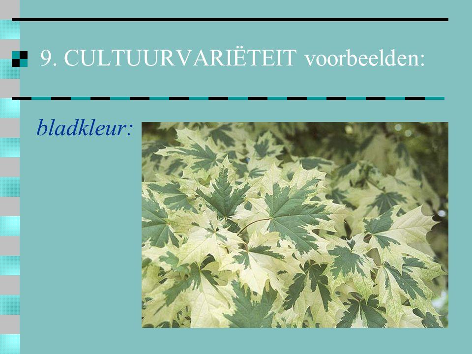 9. CULTUURVARIËTEIT voorbeelden: bloemkleur: