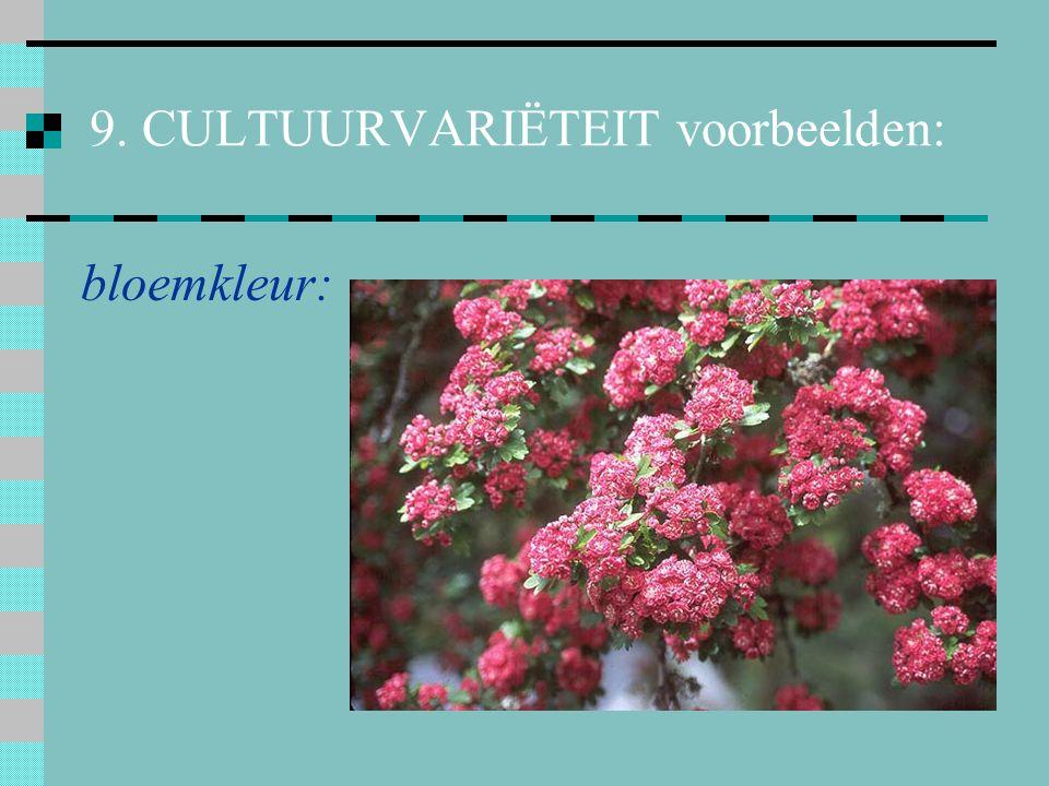 10. 5 kruisingen (hybriden) a. geslachtskruising BerberisMahonia X x Mahoberberis