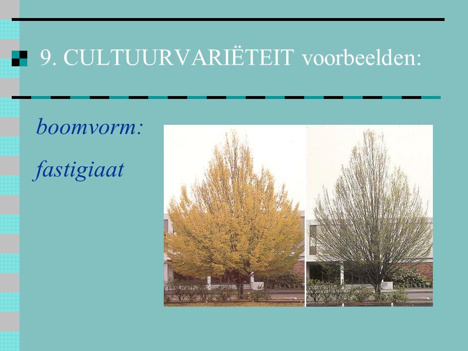 10. 5 kruisingen (hybriden) b. soortkruising Sorbus aucupariaSorbus aria X Sorbus x thuringiaca