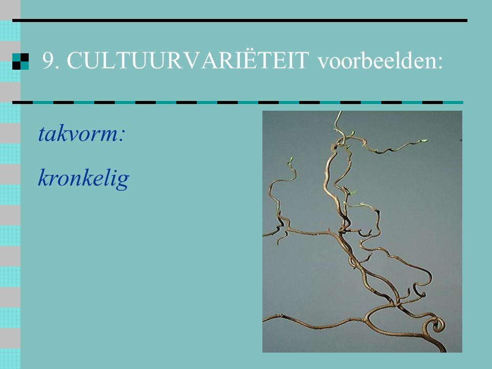 9. CULTUURVARIËTEIT voorbeelden: boomvorm: treurend