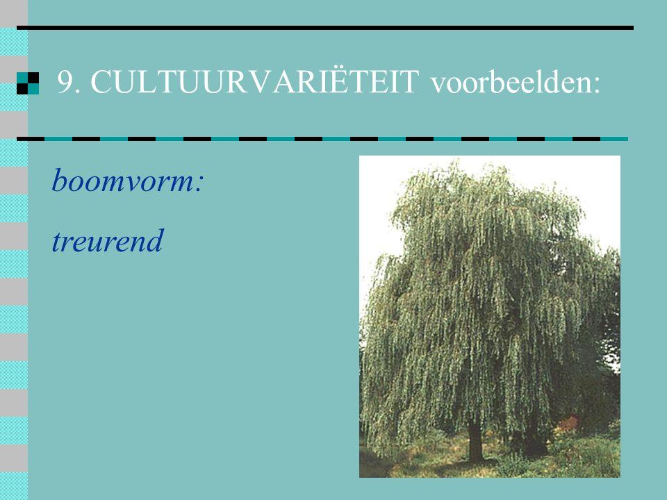 9. CULTUURVARIËTEIT voorbeelden: boomvorm: bol