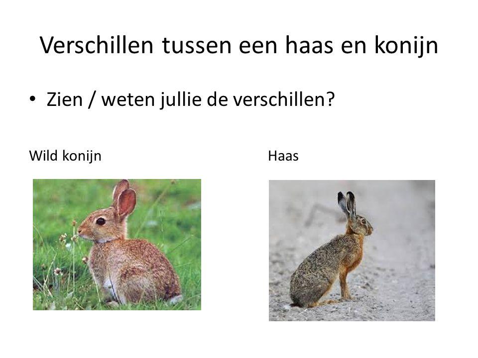 Verschillen tussen een haas en konijn Zien / weten jullie de verschillen? Wild konijn Haas