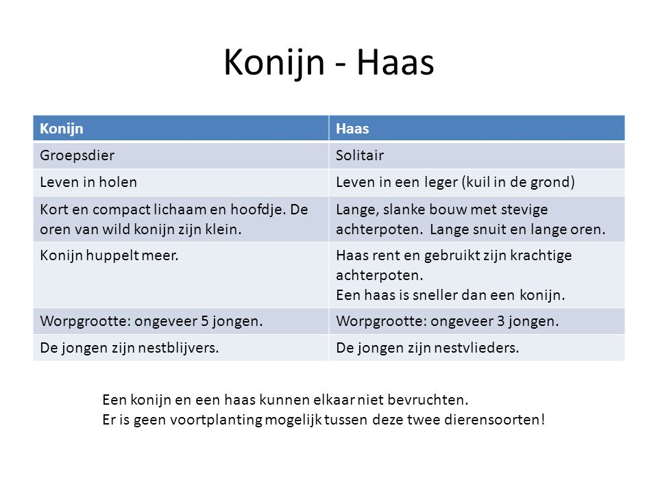 Konijn - Haas KonijnHaas GroepsdierSolitair Leven in holenLeven in een leger (kuil in de grond) Kort en compact lichaam en hoofdje.