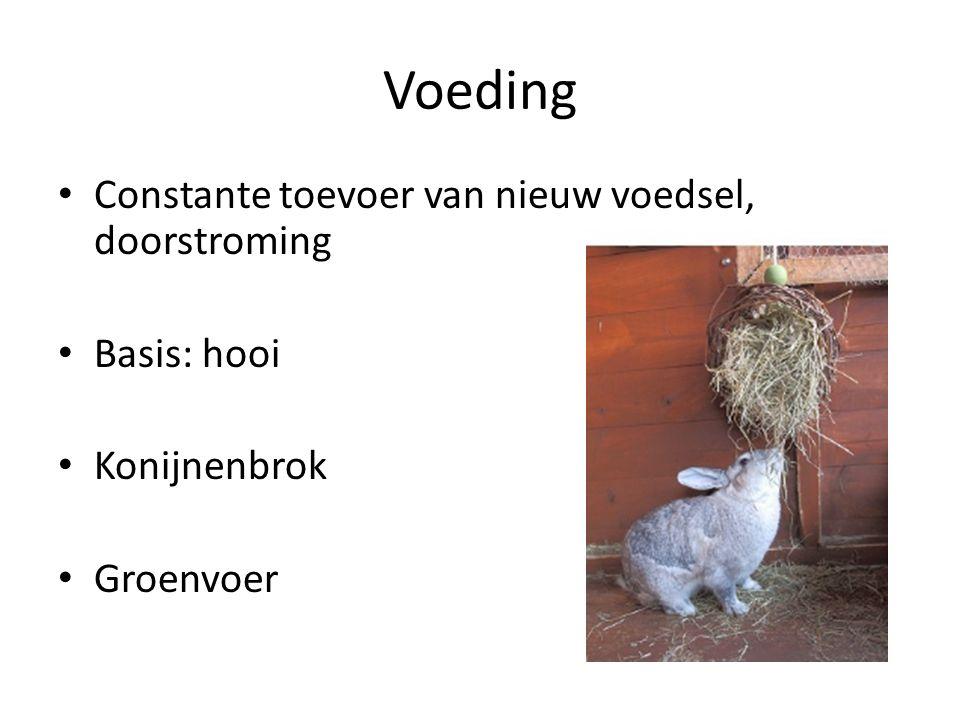 Voeding Constante toevoer van nieuw voedsel, doorstroming Basis: hooi Konijnenbrok Groenvoer