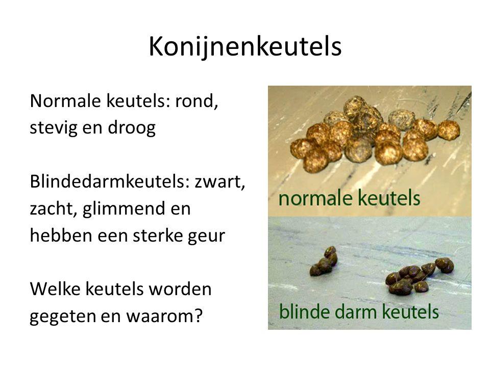 Konijnenkeutels Normale keutels: rond, stevig en droog Blindedarmkeutels: zwart, zacht, glimmend en hebben een sterke geur Welke keutels worden gegeten en waarom?