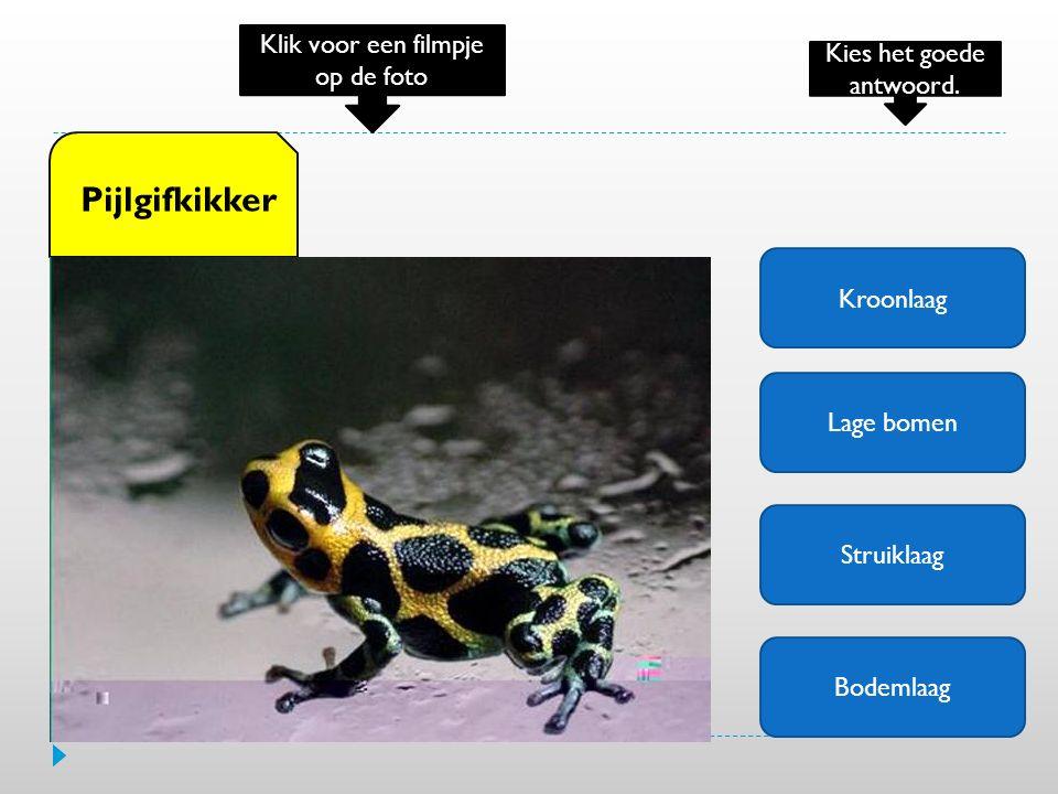 Kroonlaag Lage bomen Struiklaag Bodemlaag Pijlgifkikker Klik voor een filmpje op de foto Kies het goede antwoord.