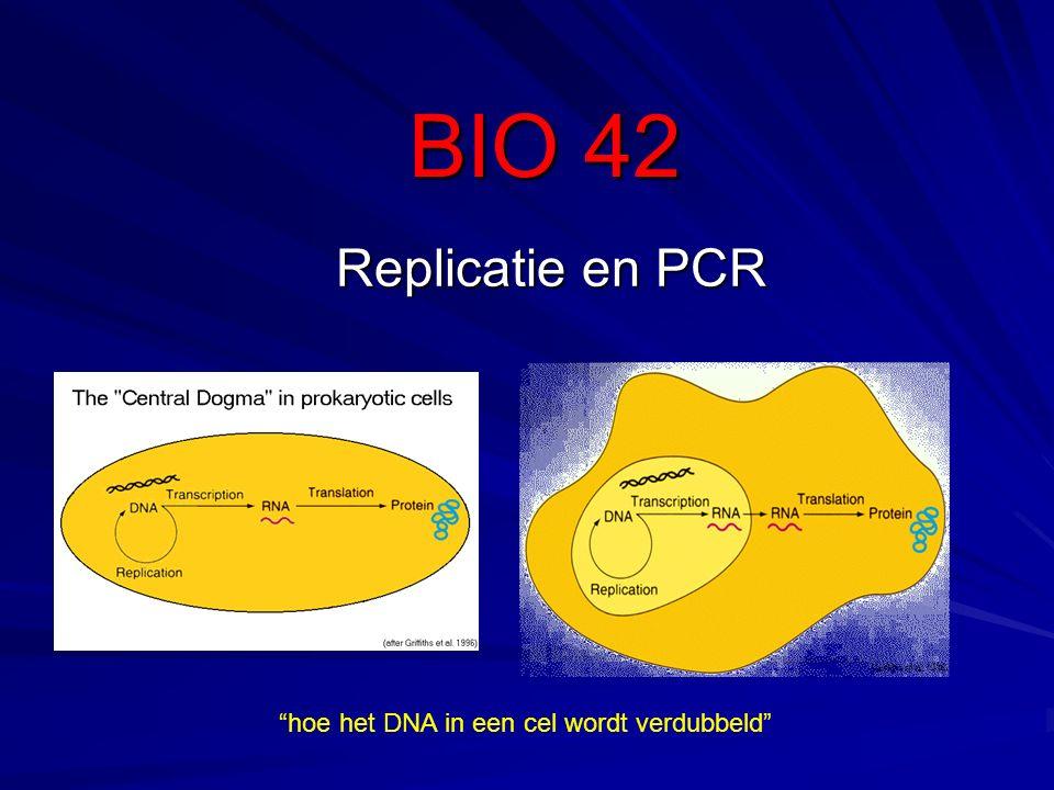 """BIO 42 Replicatie en PCR """"hoe het DNA in een cel wordt verdubbeld"""""""