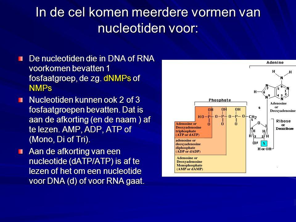 In de cel komen meerdere vormen van nucleotiden voor: De nucleotiden die in DNA of RNA voorkomen bevatten 1 fosfaatgroep, de zg. dNMPs of NMPs Nucleot