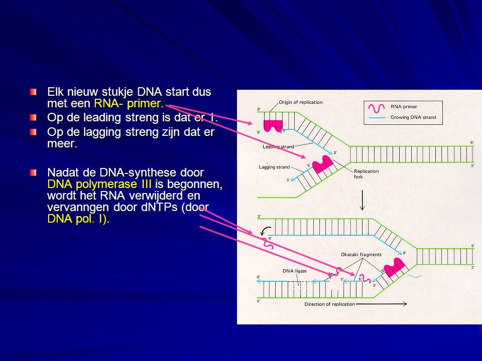 Elk nieuw stukje DNA start dus met een RNA- primer. Op de leading streng is dat er 1. Op de lagging streng zijn dat er meer. Nadat de DNA-synthese doo