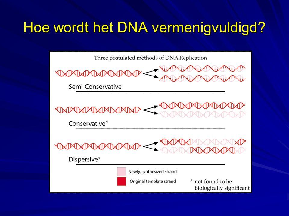 Hoe wordt het DNA vermenigvuldigd?