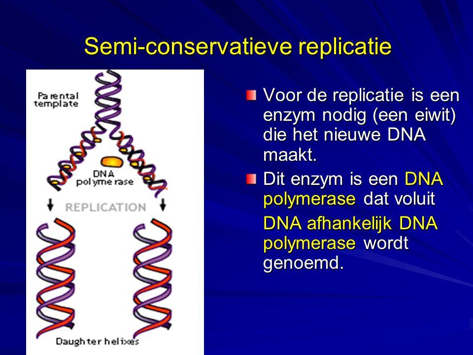 Semi-conservatieve replicatie Voor de replicatie is een enzym nodig (een eiwit) die het nieuwe DNA maakt. Dit enzym is een DNA polymerase dat voluit D