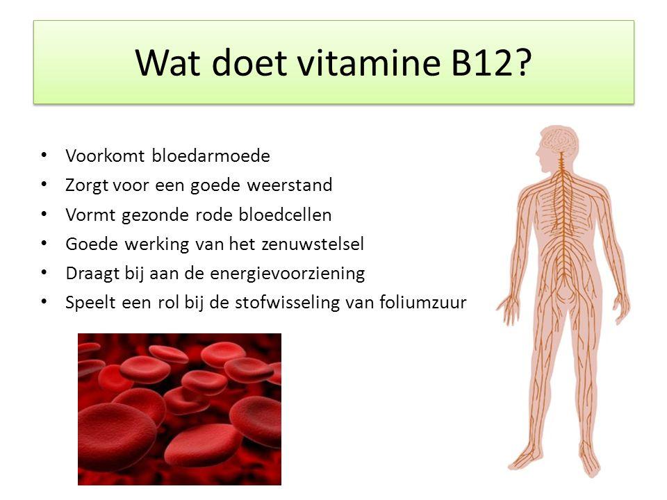 Voorkomt bloedarmoede Zorgt voor een goede weerstand Vormt gezonde rode bloedcellen Goede werking van het zenuwstelsel Draagt bij aan de energievoorziening Speelt een rol bij de stofwisseling van foliumzuur Wat doet vitamine B12?