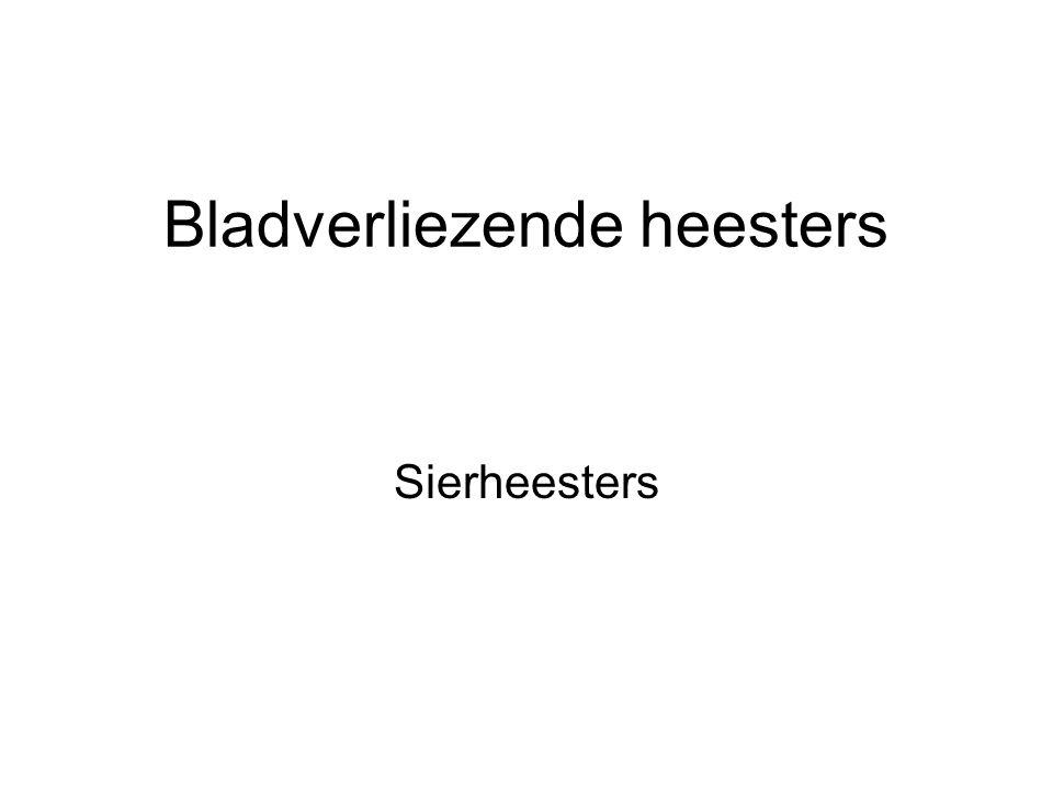Bladverliezende heesters Sierheesters