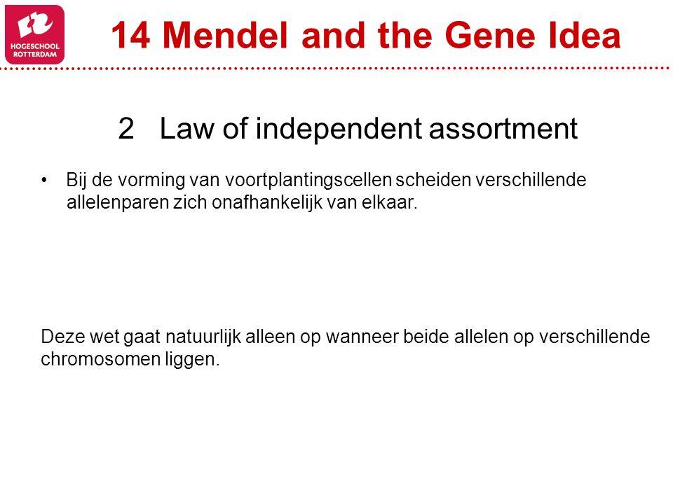 14 Mendel and the Gene Idea 2 Law of independent assortment Bij de vorming van voortplantingscellen scheiden verschillende allelenparen zich onafhanke