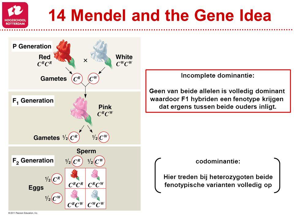 Incomplete dominantie: Geen van beide allelen is volledig dominant waardoor F1 hybriden een fenotype krijgen dat ergens tussen beide ouders inligt. co