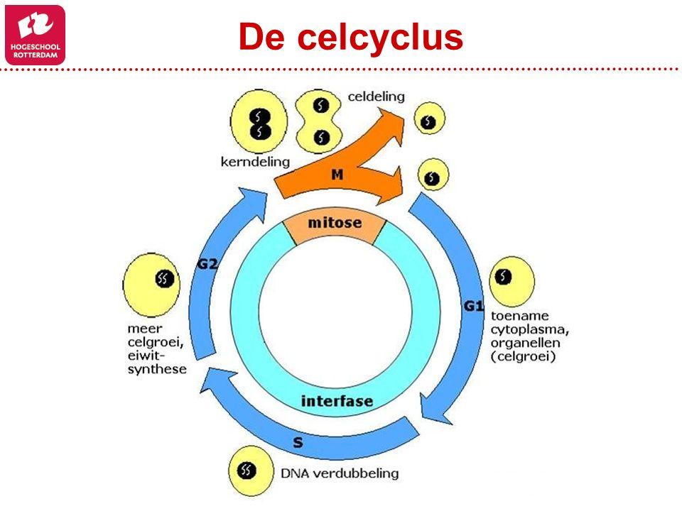 De celcyclus