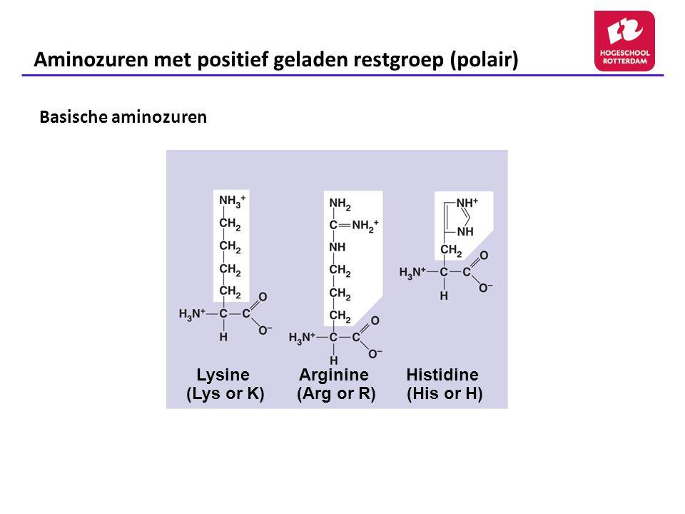 Aminozuren met positief geladen restgroep (polair) Arginine (Arg or R) Histidine (His or H) Lysine (Lys or K) Basische aminozuren