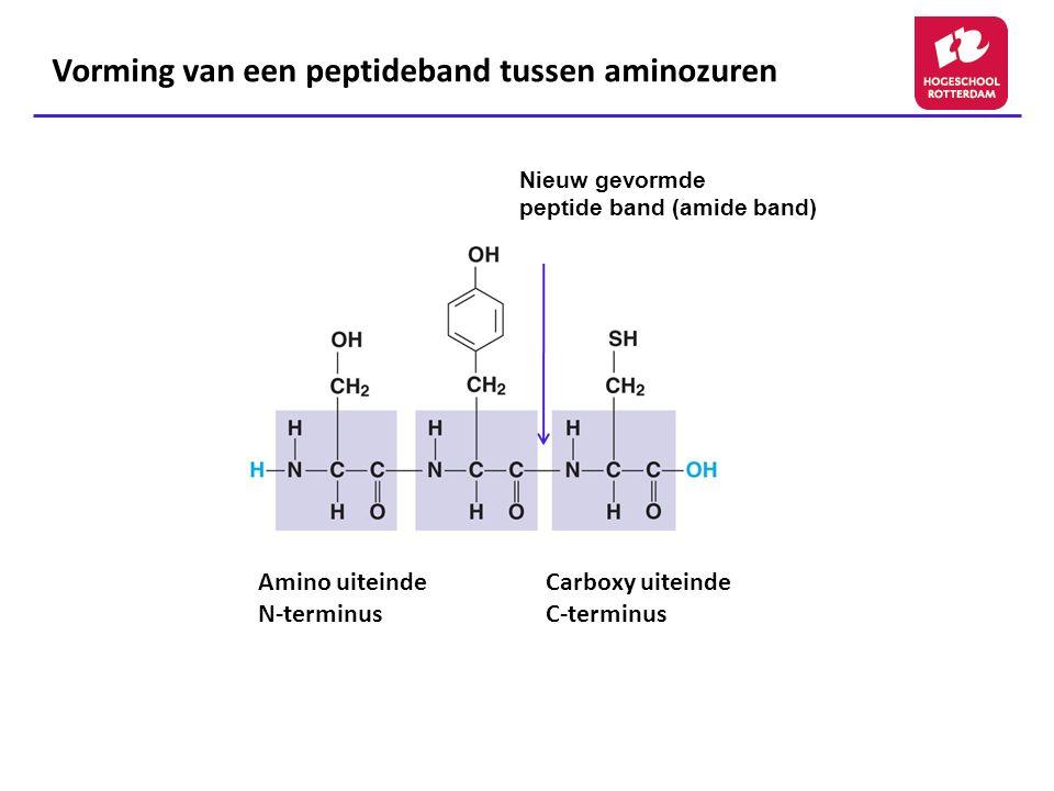 Vorming van een peptideband tussen aminozuren Nieuw gevormde peptide band (amide band) Amino uiteinde N-terminus Carboxy uiteinde C-terminus