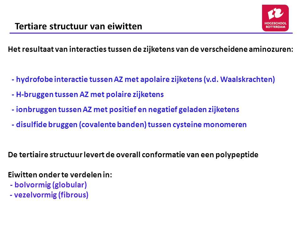 Tertiare structuur van eiwitten Het resultaat van interacties tussen de zijketens van de verscheidene aminozuren: - hydrofobe interactie tussen AZ met apolaire zijketens (v.d.
