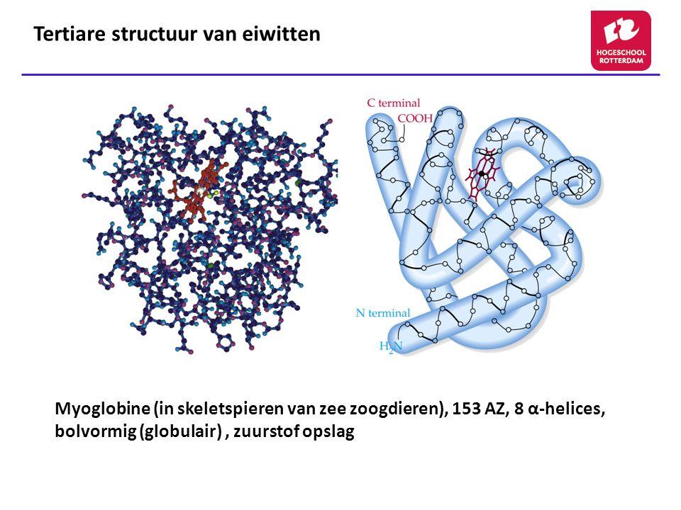Tertiare structuur van eiwitten Myoglobine (in skeletspieren van zee zoogdieren), 153 AZ, 8 α-helices, bolvormig (globulair), zuurstof opslag