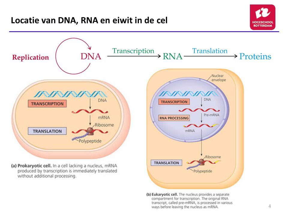 4 Locatie van DNA, RNA en eiwit in de cel