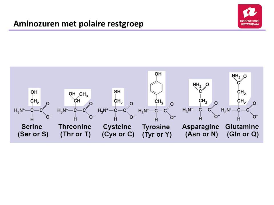 Asparagine (Asn or N) Glutamine (Gln or Q) Serine (Ser or S) Threonine (Thr or T) Cysteine (Cys or C) Tyrosine (Tyr or Y) Aminozuren met polaire restgroep